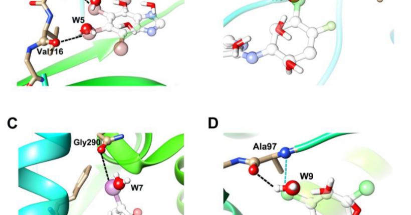 用卤键替换水分子进行先导化合物结构优化