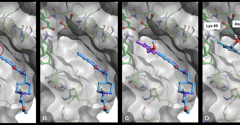 优化SPARK中的对接路径——在结合位点里直接计算配体-蛋白相互作用来发现新的结果