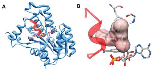 OpenEye案例 | 基于形状静电相似性虚拟筛选发现全新的FabI抑制剂-墨灵格的博客