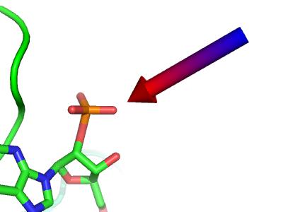 教程 | 如何用Pymol展示配体-受体相互作用-墨灵格的博客