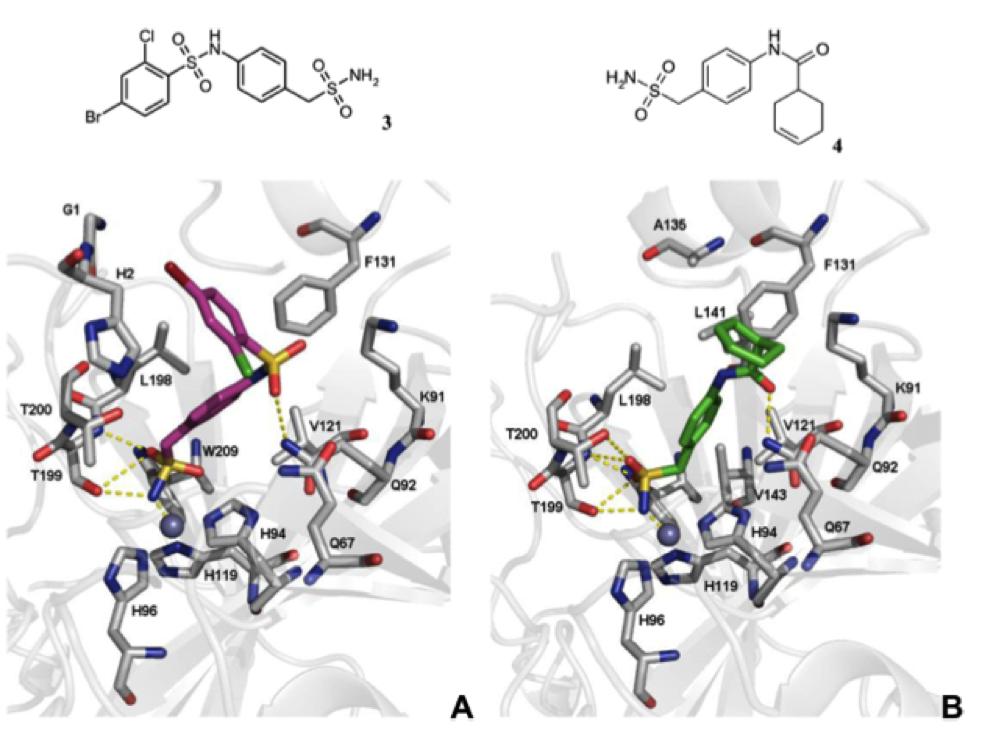 LigandScout案例 | 基于结构的虚拟筛选发现新的碳酸酐酶VII型抑制剂-墨灵格的博客