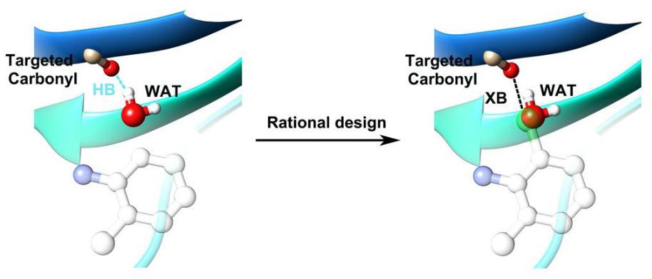 通过替换计算出的结合位点水分子,提出利用XB相互作用进行合理药物设计的策略
