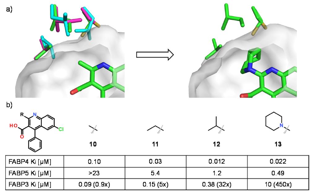 FABP4与化合物10、13的结合模式