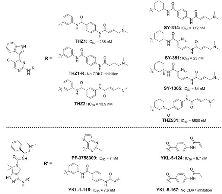 CDK7抑制剂用于癌症治疗:尝到成功的味道了吗?-墨灵格的博客