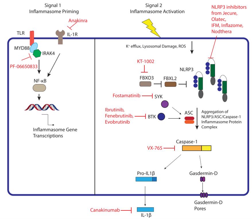 靶向NLRP3炎症小体的策略-墨灵格的博客