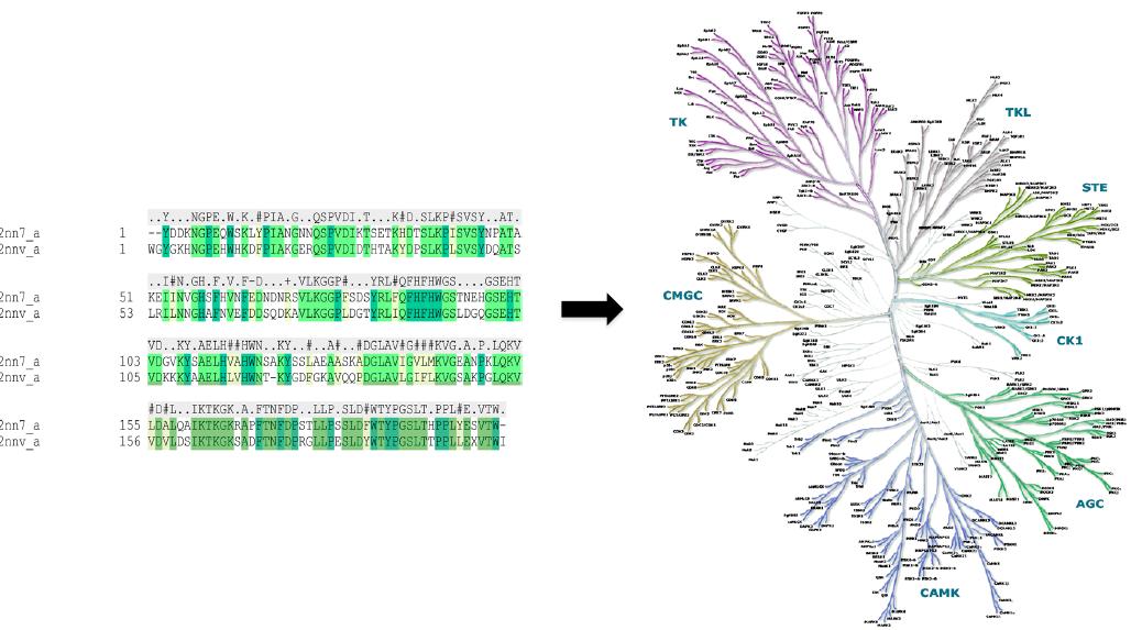 SiteHopper——独特的蛋白结合为位点比较工具-墨灵格的博客